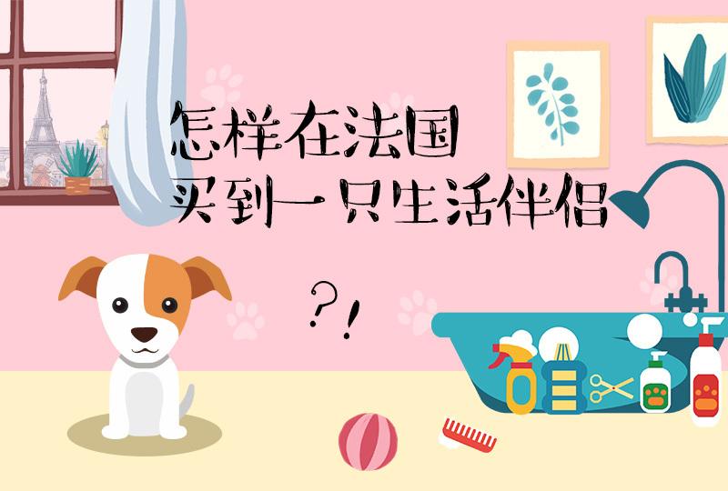 【一分钱攻略】法国狗狗购买详解,你的狗子正在路上!