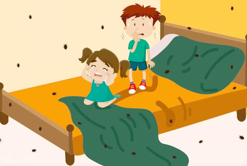 """法国床虱大""""爆发"""",可能就隐藏在你的卧室!别怕,治理小妙招来啦!"""